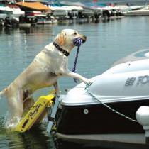 "Pawz Pet Products Doggy Boat Ladder 64"" x 16"" - PA-Z5200"
